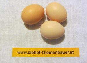 BioEier_1